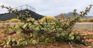 spekboom green housing greenhouse effect property for sale in pretoria